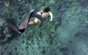 Las mejores playas para hacer snorkel en Tenerife