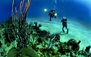 divers-681516_1280
