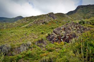 Parques rurales de Tenerife